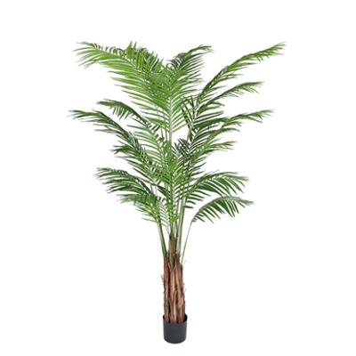 Image for Areca Palm