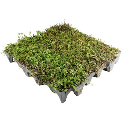 Image for ANS GrufeKit Green Roof System – Sedum
