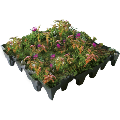 Image for ANS GrufeKit Green Roof System – Sedum and Wildflower