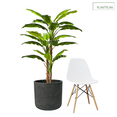 Image for 1 x Black, Concrete Effect Planter - Replica Banana Plant - 1700mm