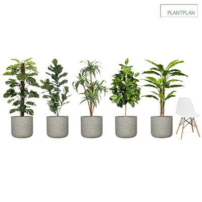 Obrázek pro Set of 5 Grey, Concrete Effect Planters with Mixed Replica Tropical Planting - 1700mm