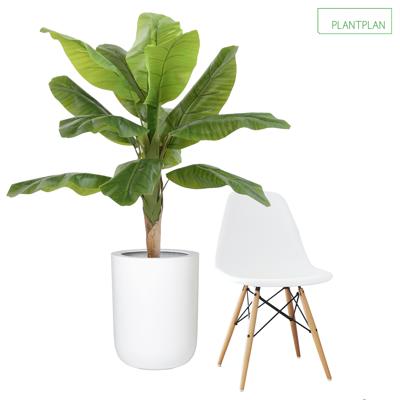 Obrázek pro 1 x White Gloss Planter - Replica Banana Tree - 1600mm