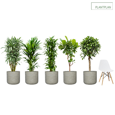 Obrázek pro Set of 5 Grey, Concrete Effect Planters with Mixed Live Tropical Planting - 1700mm