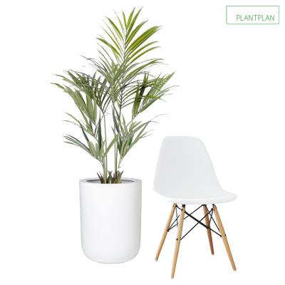 Obrázek pro 1 x White Gloss Planter - Replica Palm - 1600mm
