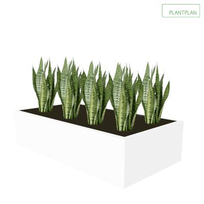 Obrázek pro Cabinet Top Trough - Sansevieria Planting - 800mm x 400mm x 200mm