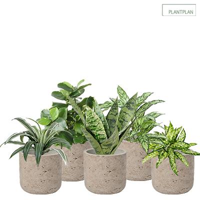 Obrázek pro Set of 5 x Grey, Concrete Effect Pots - Replica Tropical Planting - 300mm