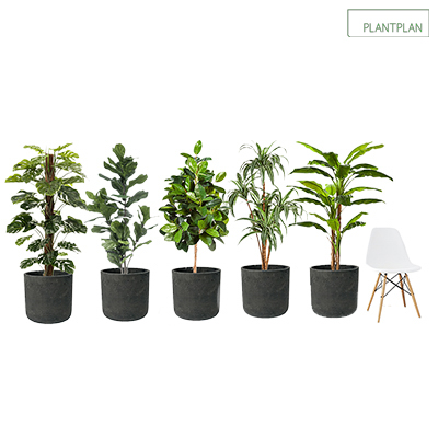 Obrázek pro Set of 5 Black, Concrete Effect Planters with Mixed Replica Tropical Planting - 1700mm