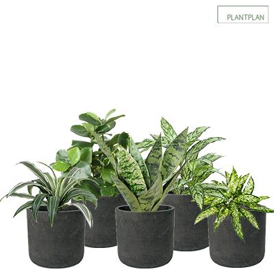 Image for Set of 5 x Black, Concrete Effect Pots - Replica Tropical Planting - 300mm