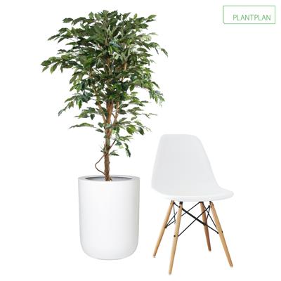 Obrázek pro 1 x White Gloss Planter - Replica Ficus Tree - 1500mm