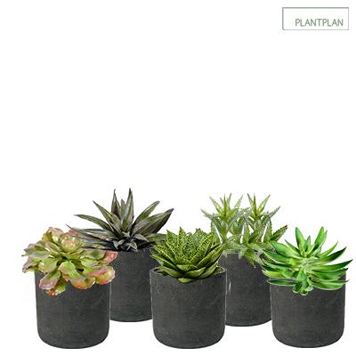 Image for Set of 5 x Black, Concrete Effect Pots - Replica Succulent Planting - 300mm