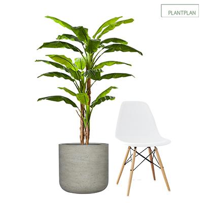 Obrázek pro 1 x Grey, Concrete Effect Planter - Replica Banana Plant - 1700mm