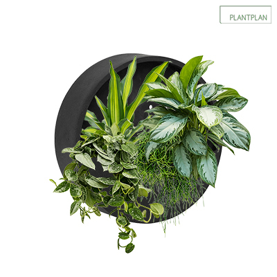 Image for Black Wall Mounted Planter - 400mm - Live Planting