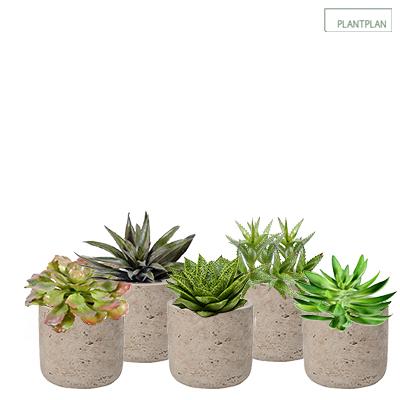 Obrázek pro Set of 5 x Grey, Concrete Effect Pots - Replica Succulent Planting - 300mm
