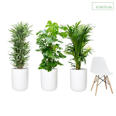 Obrázek pro 3 x White Gloss Planters - Mixed Live Planting - 1750mm