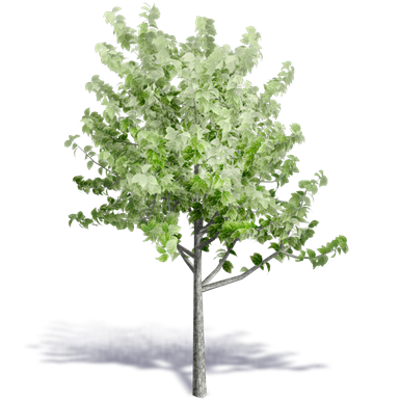 Image for Generic Summer Tree 5