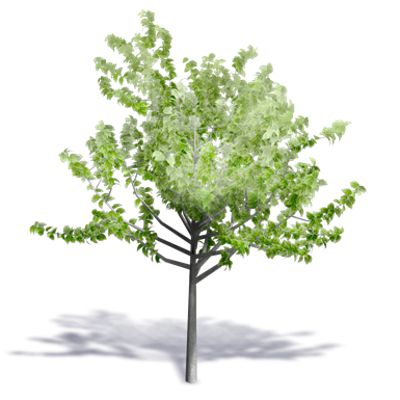 Image for Generic Summer Tree 12