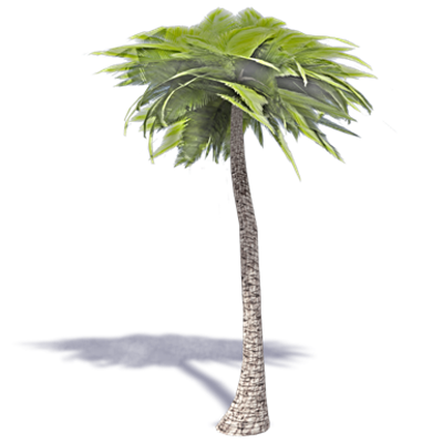 Image for Palm Tree 2