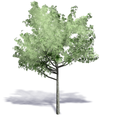 Image for Generic Summer Tree 10