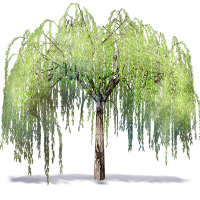 Image for Willowtree