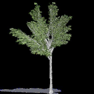 Image for Paper Birch Canoe Birch