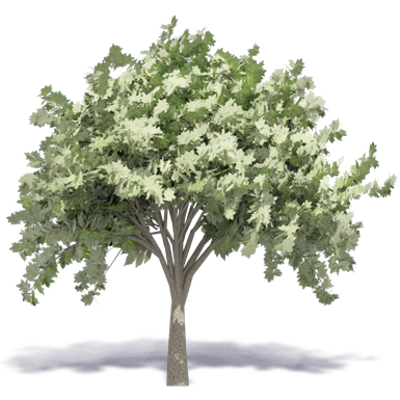 Image for Elm Tree 3