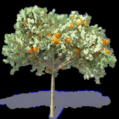 Image for Orange Tree 2