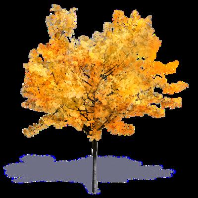 Image for Generic Autumn Tree 2