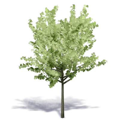 Image for Generic Summer Tree 4