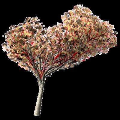 Image for Flamboyant Tree
