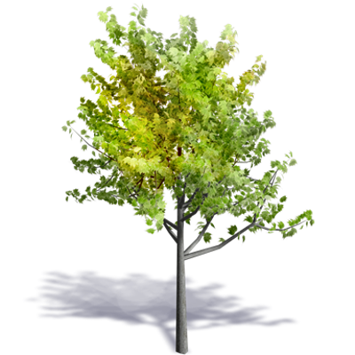 Image for Generic Summer Tree 8