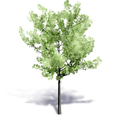 Image for Generic Summer Tree 1